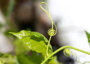 violin-key-1842117__340